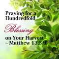 Praying for a Hundredfold Blessing on Your Harvest – Matthew 13:3-9