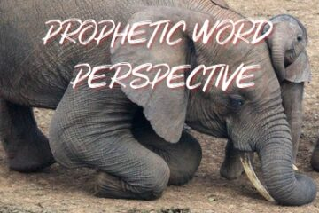 prophetic word - perspective
